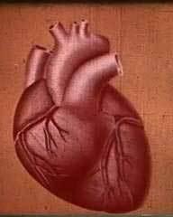 Aoleu inima mea