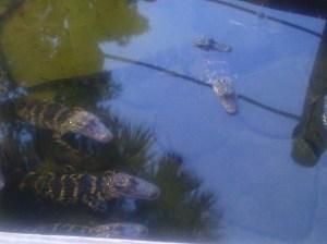 minigolfalligators