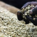 Café en Ouganda: l'ONU pas d'accord avec la Banque mondiale