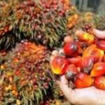 L'huile de palme convoquée au tribunal de Paris le 4 décembre…