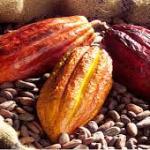 Côte d'Ivoire/Café-Cacao/ la justice britannique déboute Sucden