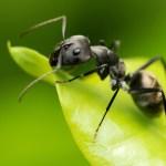 Capital investissement: le travail de fourmi du fonds IPDEV2