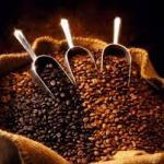 Café: l'Ouganda détrône l'Ethiopie
