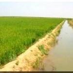 La Mauritanie ferme ses frontières au riz importé