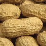 Sénègal-arachide: le prix au producteur fixè à 200 FCFA