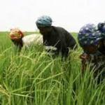 Benin: 23 milliards de Fcfa de la BAD pour lutter contre la pauvreté