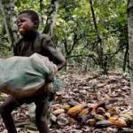 Côte d'Ivoire: Les Etats-Unis financent la lutte contre le travail des enfants dans les plantations de cacao