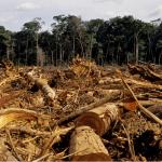 Le Togo veut «réduire la déforestation»