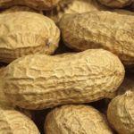 Sénégal : la production arachidière s'écroule à fin février 2016