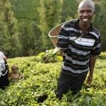 Cameroun : La Chambre d'agriculture du Cameroun mobilise 300 millions de FCfa pour lancer sa structure de microfinance
