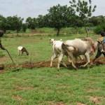 Burkina: Vers la création d'une banque agricole pour soutenir l'agriculture