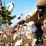 En route vers la COP22: l'Agriculture africaine sera sauvée par la finance climat