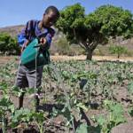 La Facilité africaine de l'eau soutient la capacité des petits agriculteurs