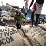 Côte d'Ivoire: réduction de la taxe à l'export au profit des industriels du café et du cacao