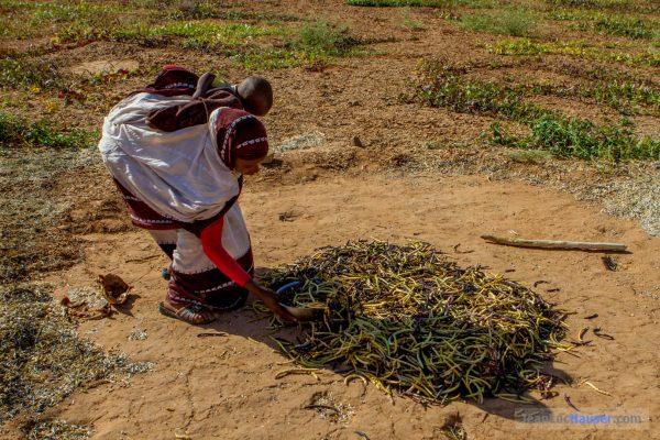 Jeune paysanne dans une culture de haricots