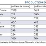 Côte d'Ivoire: panique sur les contrats Cacao