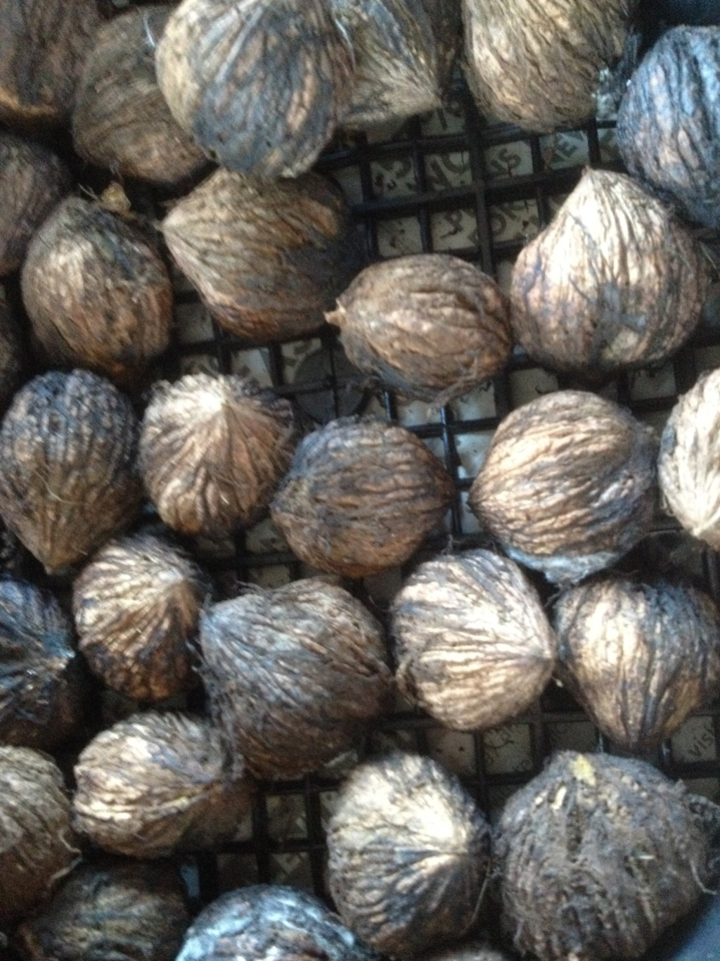 Black Walnuts Dried