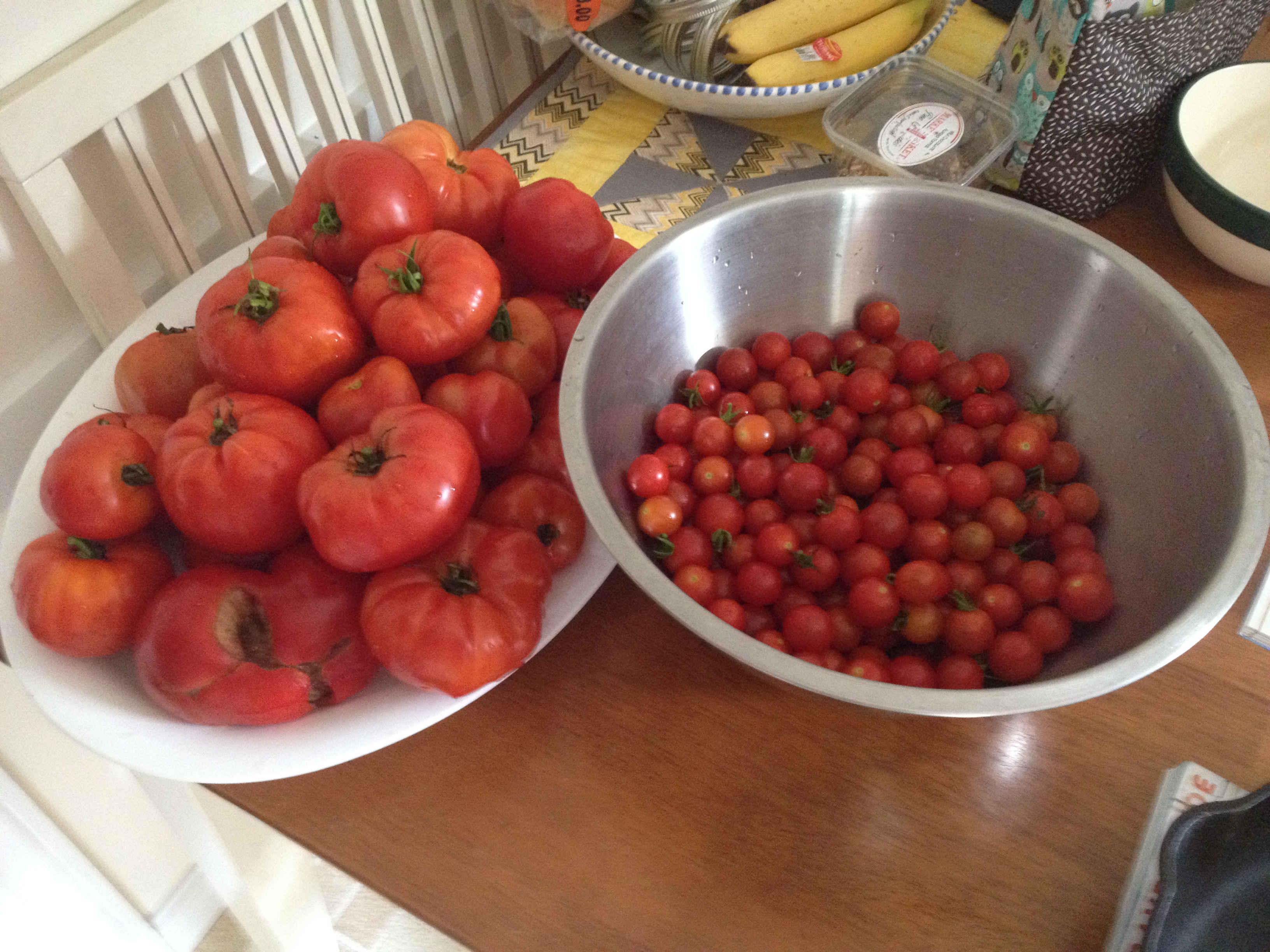 garden salsa tomatoes