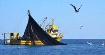 Mersin'de 6 Metre Boyunda Köpek Balığı Yakalandı