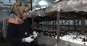 Yılda 220 Ton Mantar Üretip Kilosunu 8 Liradan Satıyor