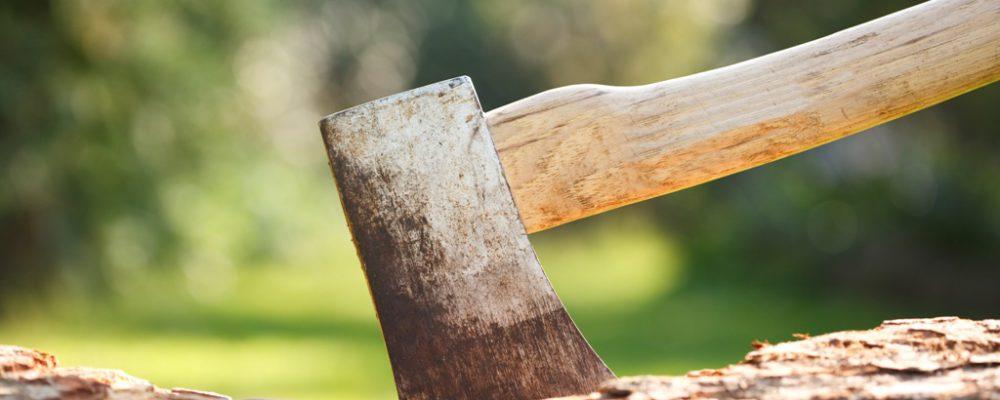 Wycinka drzew nowe przepisy 2017