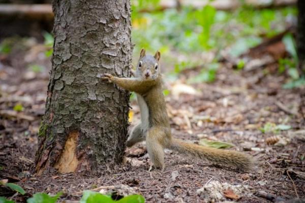 Wycinka drzew zaostrzenie przepisów przez Sejm
