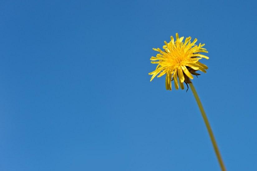 Minimalismus_Einfachheit_Verzicht_Glück_Leben