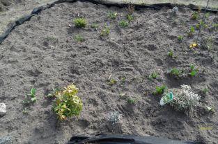 Tulpen, Krokusse, Hyazinthen