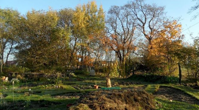 Herbstlicher Garten 45. Kalenderwoche 2014