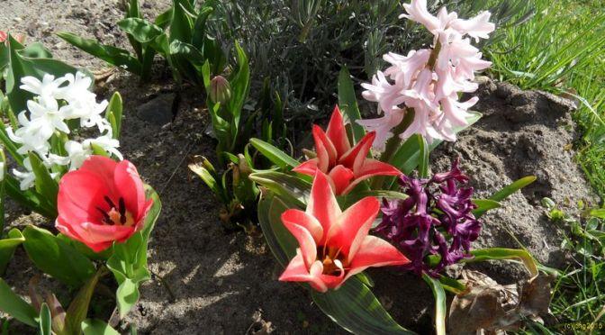 Frühlingseindrücke 2015