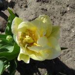 jcgSAM_13129[Web Garten] 21.04.2015 14_55_07