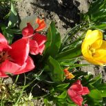 jcgSAM_13146[Web Garten] 21.04.2015 14_57_16