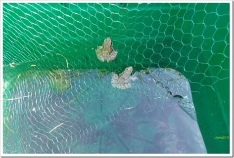 Die Frösche im Wasservorratsbehälter