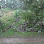 Starkregen am 27.07.2014