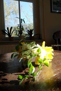Gefüllte Osterglocke und Narzissen