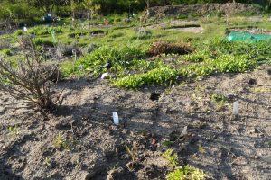 Petersilie, Gartenkresse und Oregano