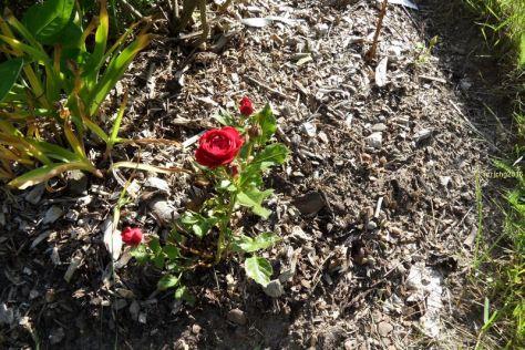 Rote Rosen am 11.06.