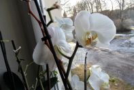 Orchideen am 04.02.2017