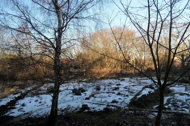 Der Garten am 04.02.207 aus demWohnzimmer fotografiert