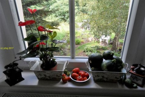 Anthurie, Tomaten, Zucchini, Gurken im Küchenfenter am 20.08.2017