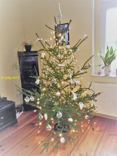 Der Weihnachtsbaum - Eine Rotfichte 24.12.2017