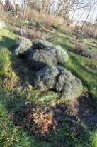 """Lavendel im Beet """"Acht"""" am 26.12.2017"""
