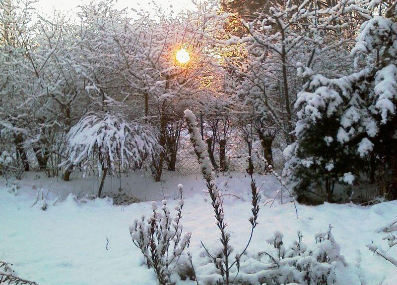 Winter im Finkenkruger Garten 2009