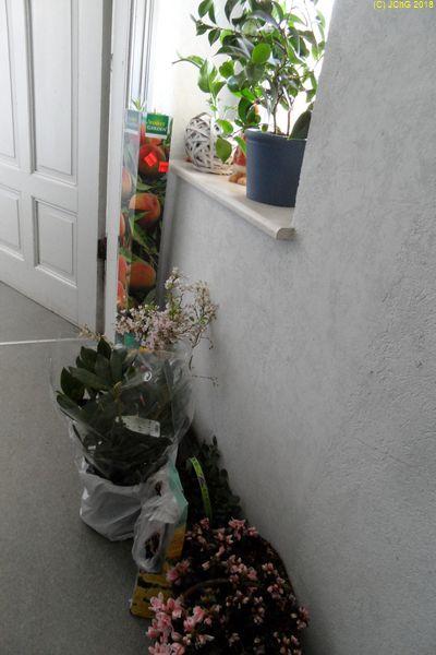Pflanzen warten im Hausflur auf das Ende des Winters am 10.03.2018