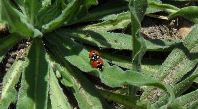 Insektensommer beginnt