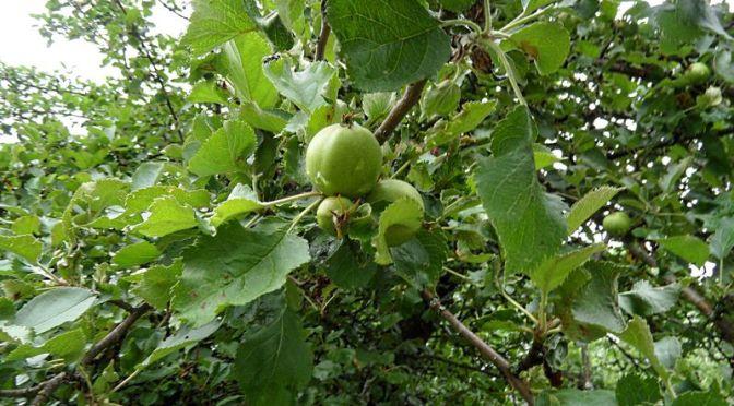 Überraschende Früchte