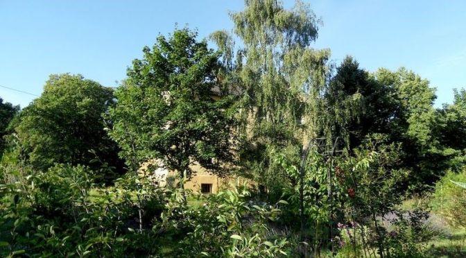 Garten am Morgen Südblick 4.8.20