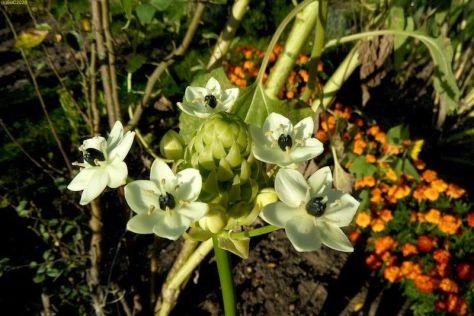 Weiße Blüten 27.9.14