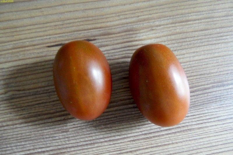 """Tomate """"Roma"""" geerntet im Spätsommer September 2017"""