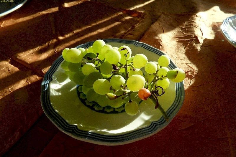 Weintraube aus dem Garten 20.9.20
